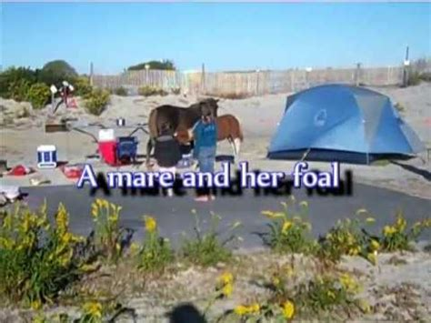 Camping on Assateague Island with wild ponies - YouTube