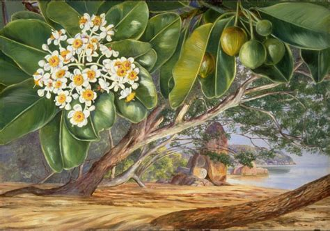 The Planthunter – Marianne North: Lady Painter