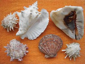 coquillage - Wiktionary